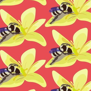 Lily Bee