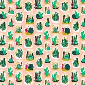 terrariums // potted houseplants succulents cacti cactus