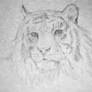 Tiger, in Gray Tones