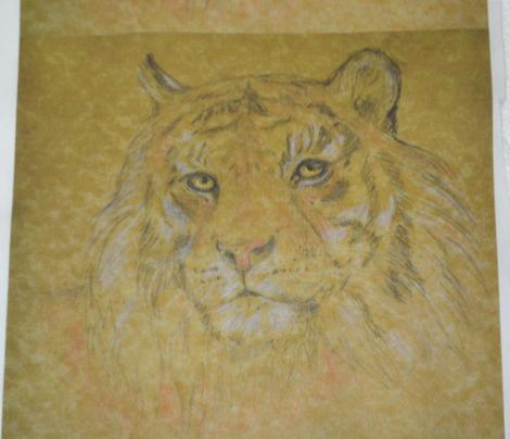 Tiger, Vivid