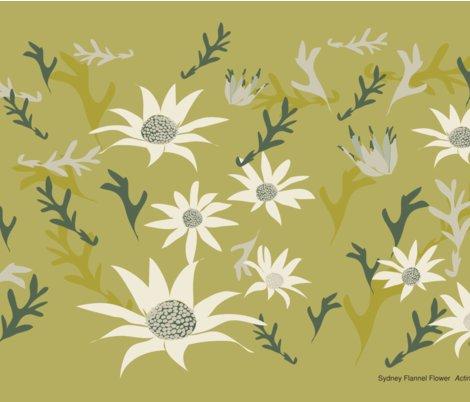Rsydney_flannel_flowers_quarter_a.ai_shop_preview