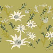 Rsydney_flannel_flowers_quarter_a.ai_shop_thumb