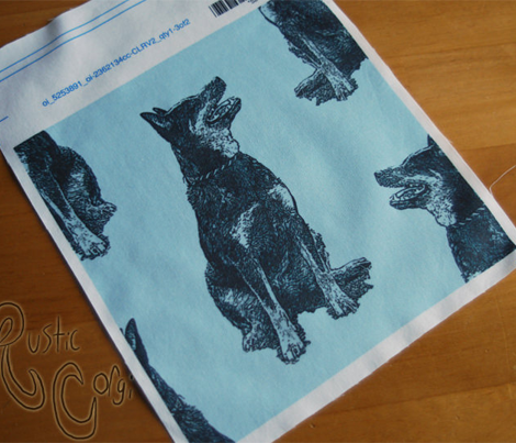 Sitting Australian cattle dog - blue