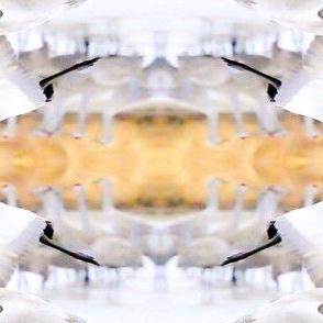 Sand Hill Crane migration