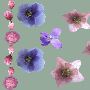 Helioborus__Tulip__rose_and_Pansy_Border_A