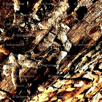 Bark Beetle Etching
