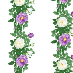 rose_border_purple_and_white_2_a_large_12x12_vert