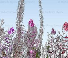 Rpink_floral_border2_copy_comment_578550_preview