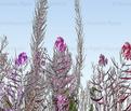 Rpink_floral_border2_copy_comment_578550_thumb