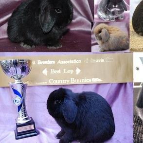 Camelot Show Rabbits