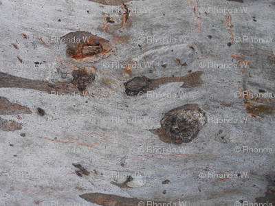 Nature's Bark Scribbles (Ref.1650a)