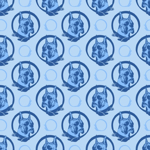 Collared Boxer portraits - blue