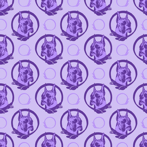 Collared Boxer portraits - purple