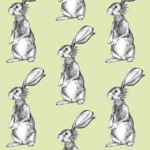 Pencil Rabbits on Light Green