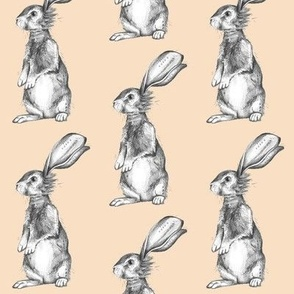 Pencil Rabbits on Peach