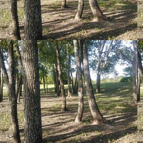 Breckenridge Park 5