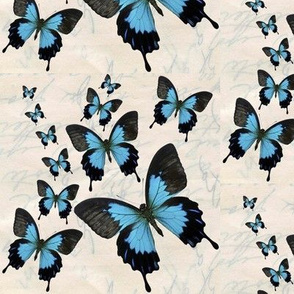 For a Cause - Butterfly Inspiration