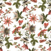 Rtropicalia_floral___peacoquette_designs___copyright_2015_shop_thumb