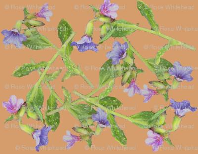 pulmonaria flowers scattered