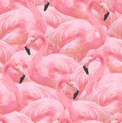 Flamingo Fever in Pink