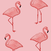 Bimini Bay Flamingos on Pink