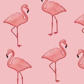 Bimini Bay Flamingos on Pink