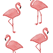 Bimini Bay Flamingos