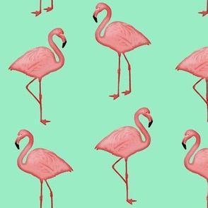Bimini Bay Flamingos on Mint