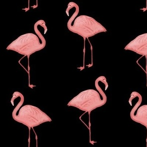 Bimini Bay Flamingos in Black