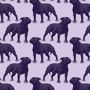 Posing Staffordshire Bull Terrier - purple