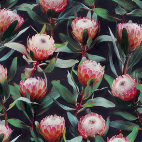 Evening Proteas - Pink on Charcoal