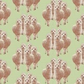 emu on green linen