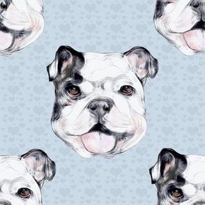 Happy Bulldog on blue hearts