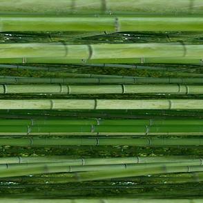 Bamboo - seamless