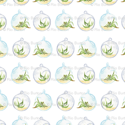 Airplants_preview