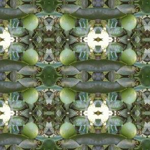 Lime Twist (Ref. 1184)