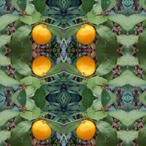Golden Fruit In the Enchanted Garden