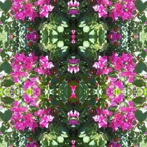 Hot Pink Bouganvillea Lacework (Ref. 1825a)