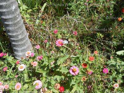 Garden Bridges and Floral Paths (Ref. 0350)