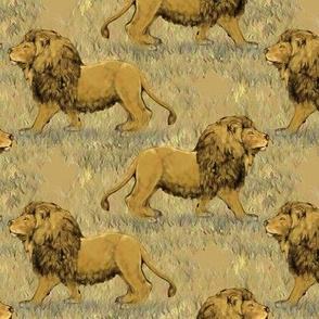 Nubian lion 2