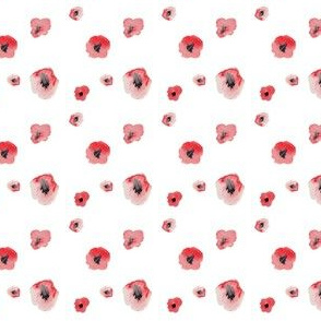 poppies on clean white
