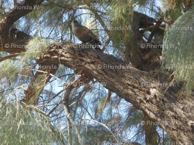 A Bird's Eye View from Woodland Windows (Ref. 0235)