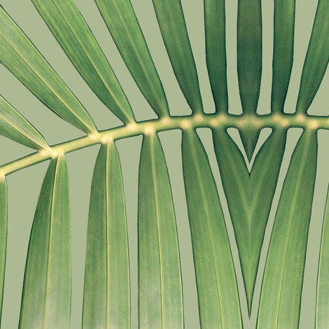 palm_leaf fabric by sallynoodle on Spoonflower - custom fabric