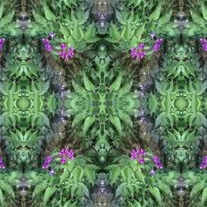 spring vetch lathyrus vernus