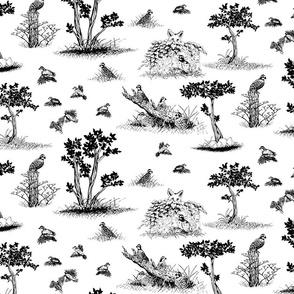 bobwhite quail toile de jouy black
