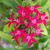 Rrrrrpinkflowers_shop_thumb