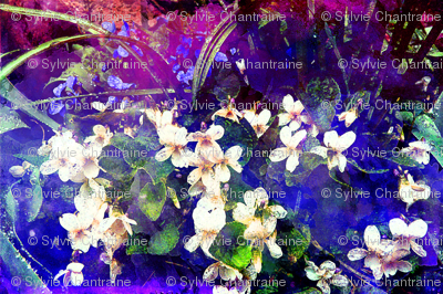WHITE VIOLETS FEAST OF BLOSSOM MYSTERIOUS GEOMETRY Night Blue