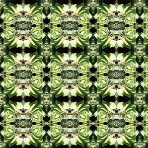 Suculent Squares