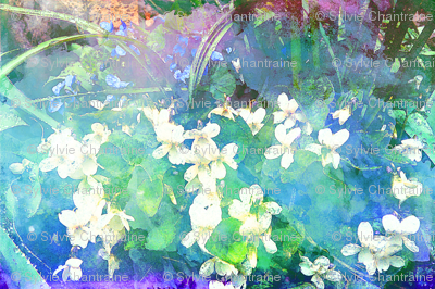 WHITE VIOLETS FEAST OF BLOSSOM MYSTERIOUS GEOMETRY AQUATIC MORNING