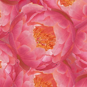 Peonies Fabric and Wallpaper